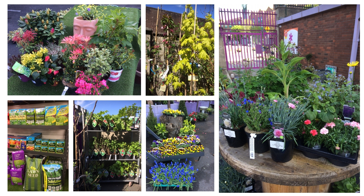 A collage image of colourful flowers, plants and other stock available to buy in the garden centre