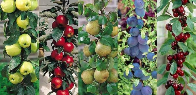 five different varieties of fruit trees